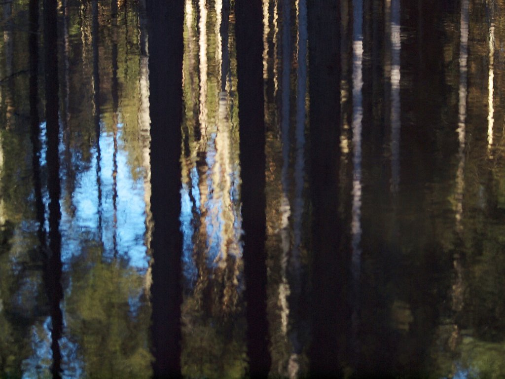 Reflection in the Water