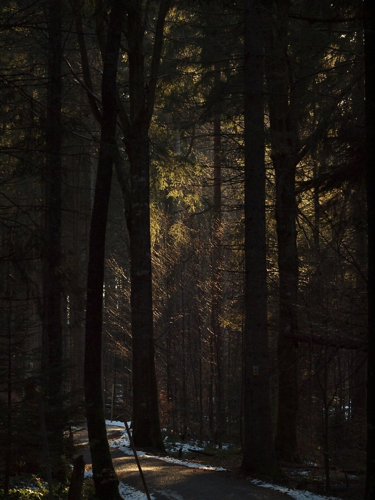 Evening Sun on the Forest