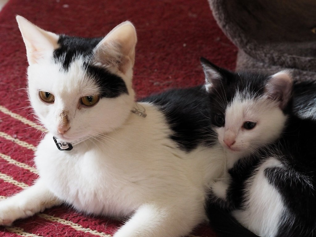 Mother & Daughter (Emmi & Piratin)