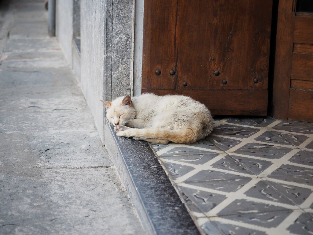 Cat Siesta on a hot day (1)