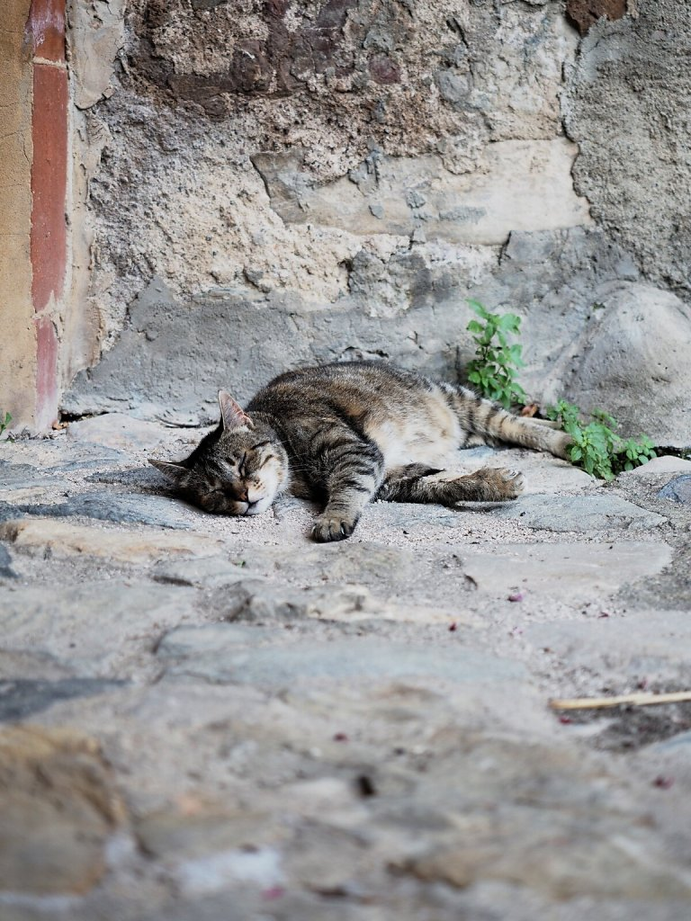 Cat Siesta on a hot day (2)