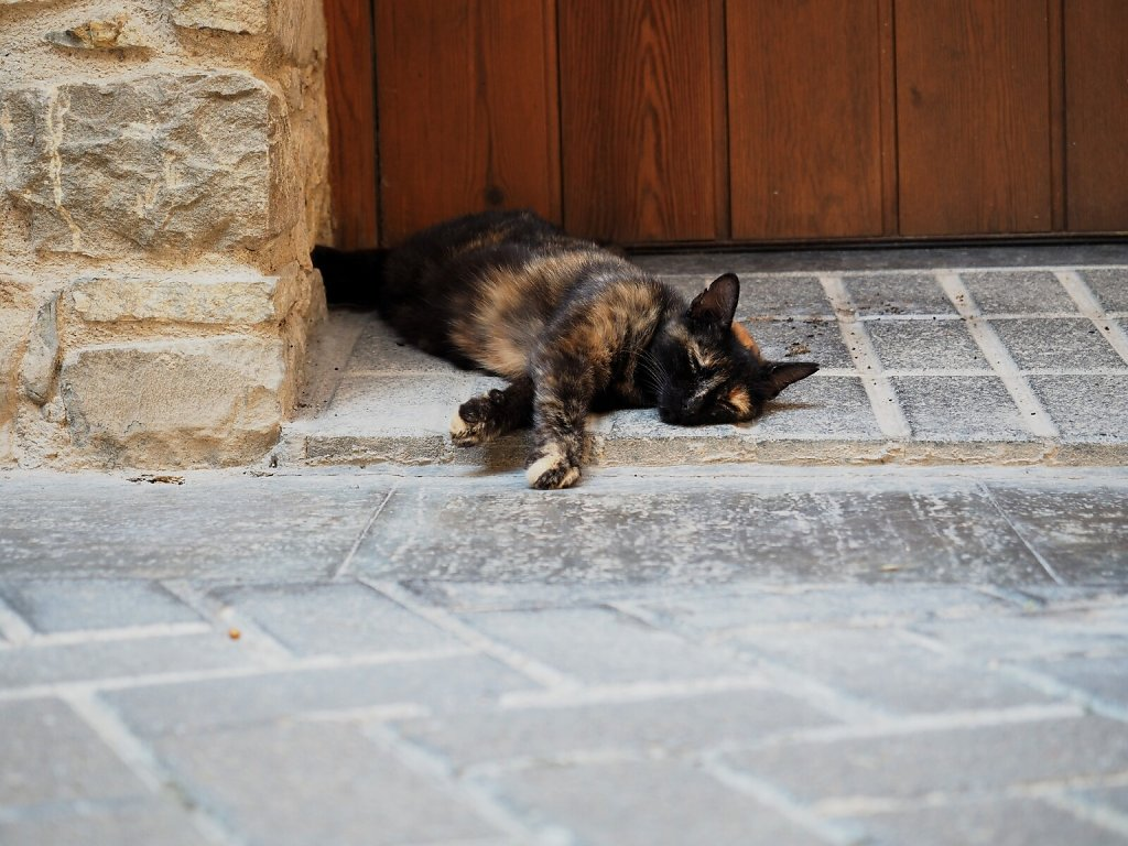 Cat Siesta on a hot day (3)