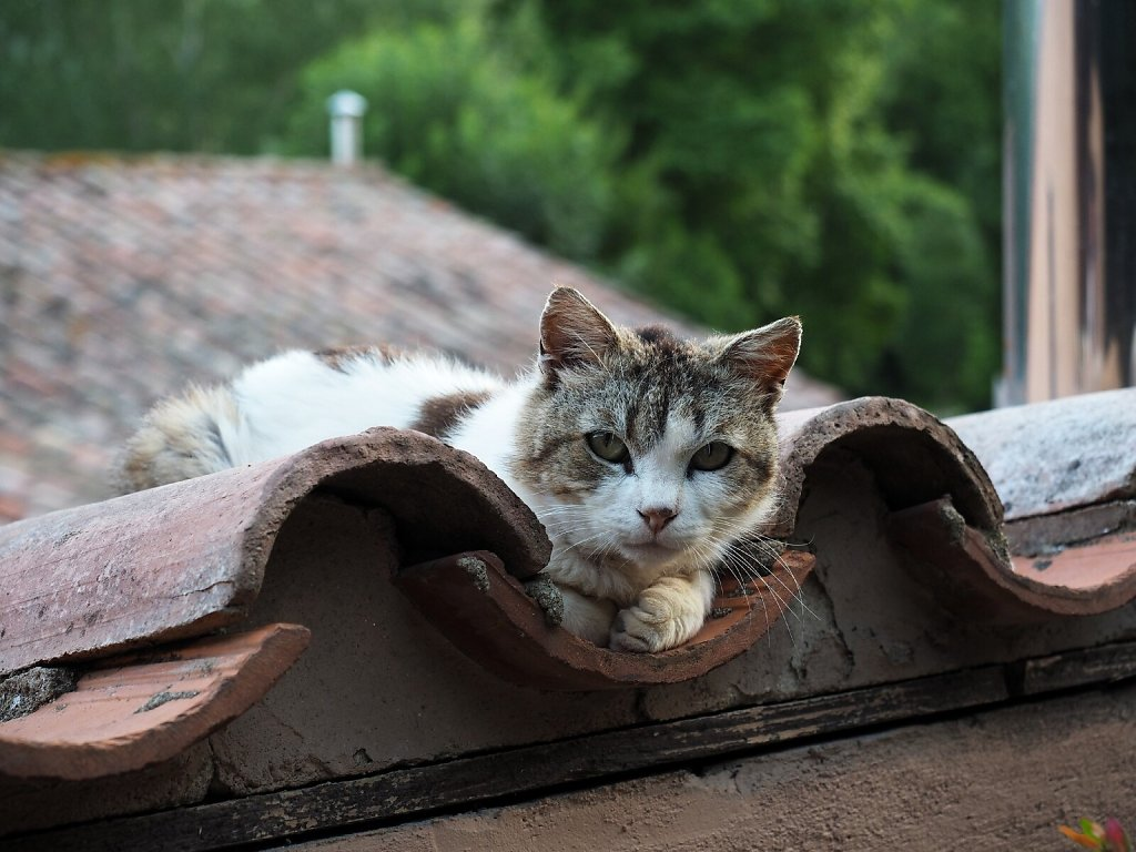 Old and Very Shy Cat
