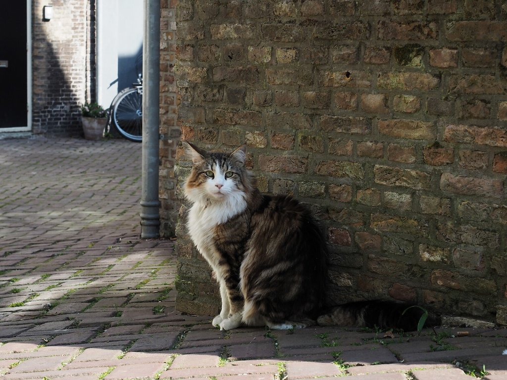 Shy cat in Dordrecht