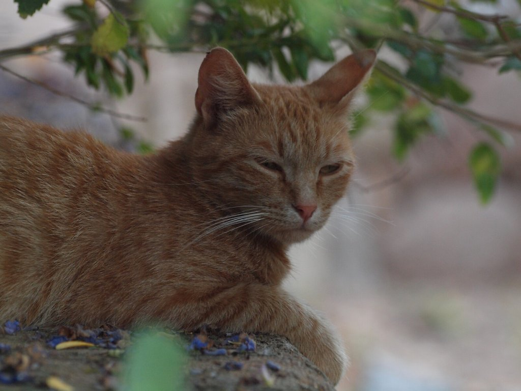 Our temporary adoption cat at our renthouse in Figari, Corsica