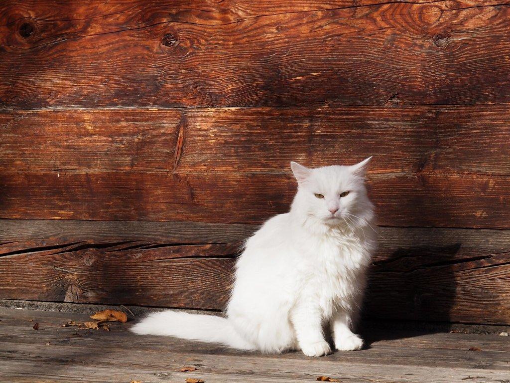 Very confident and cuddly cat met at Kriechbaumhof, Munich