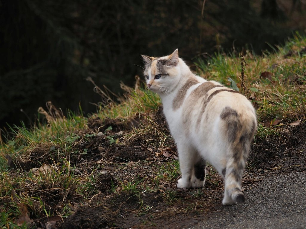 Friendly cat met during a hike around Murbach, Alsace