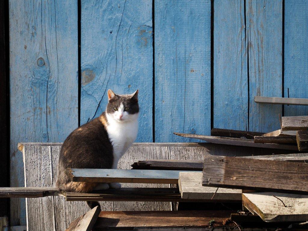 Cat met during a walk around Frauenau, Bavarian Forest