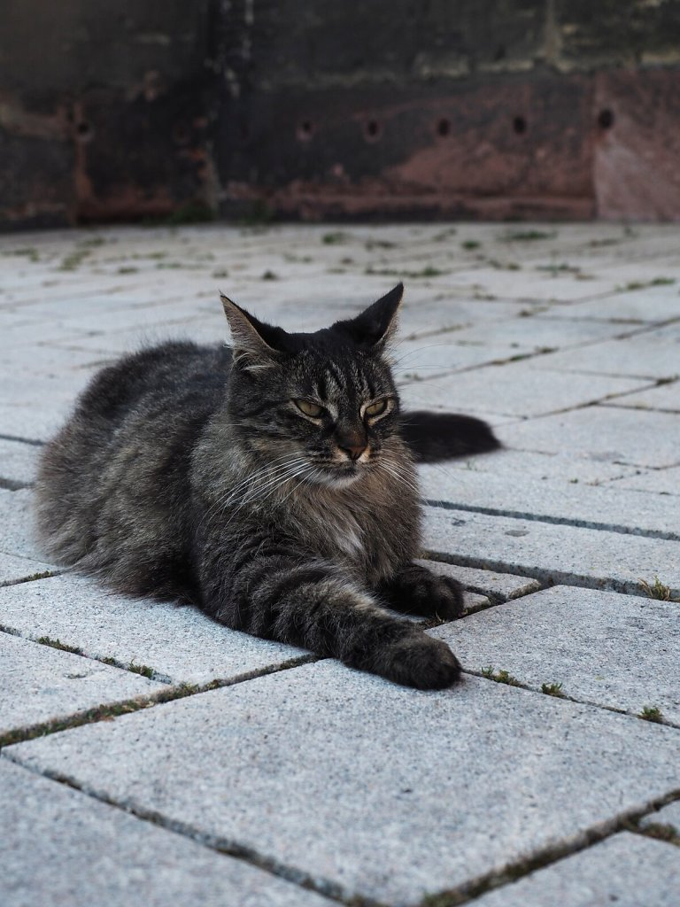 Enjoying the warm pavement at the end of a hot day