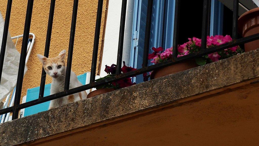Curious Young Cat