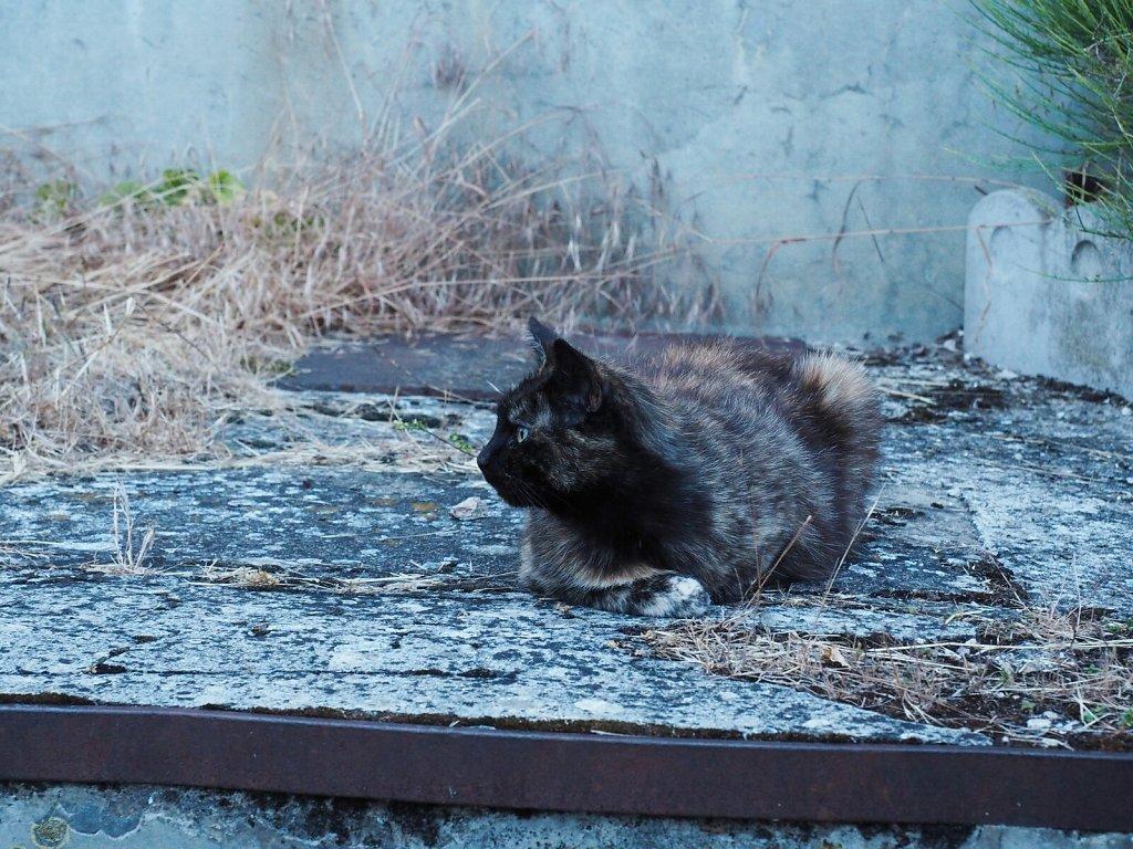 Friendly Little Pregnant Cat
