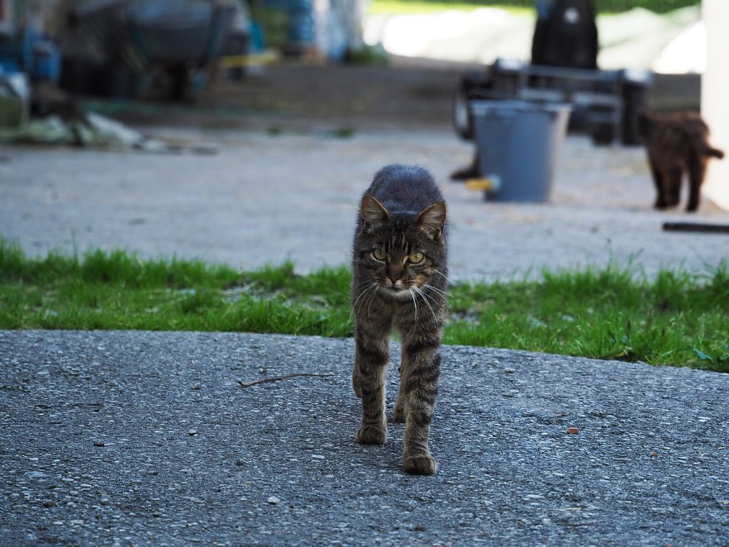 Skinny Cat met on a Farm