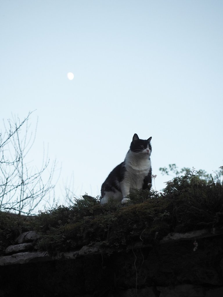 Cat Enjoying the Evening Warmth and the Moon Light