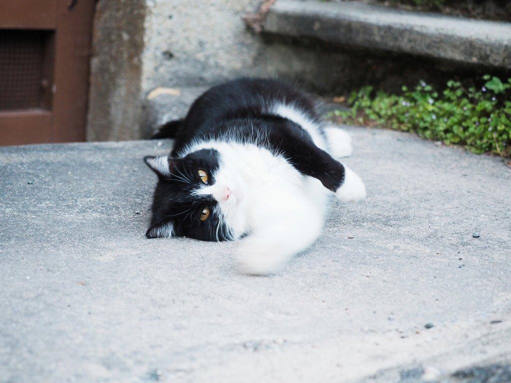 Cuddling Cat