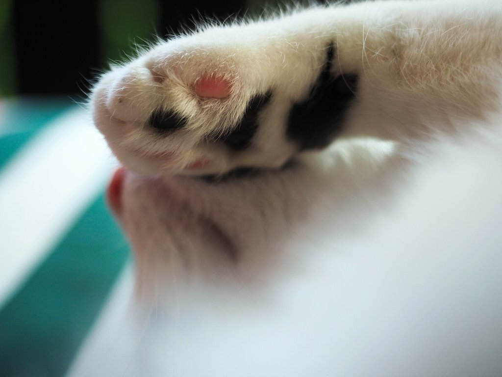 Paw on Snout (Gray)