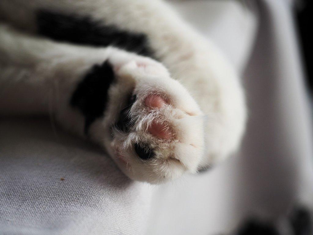 Grey's Paws