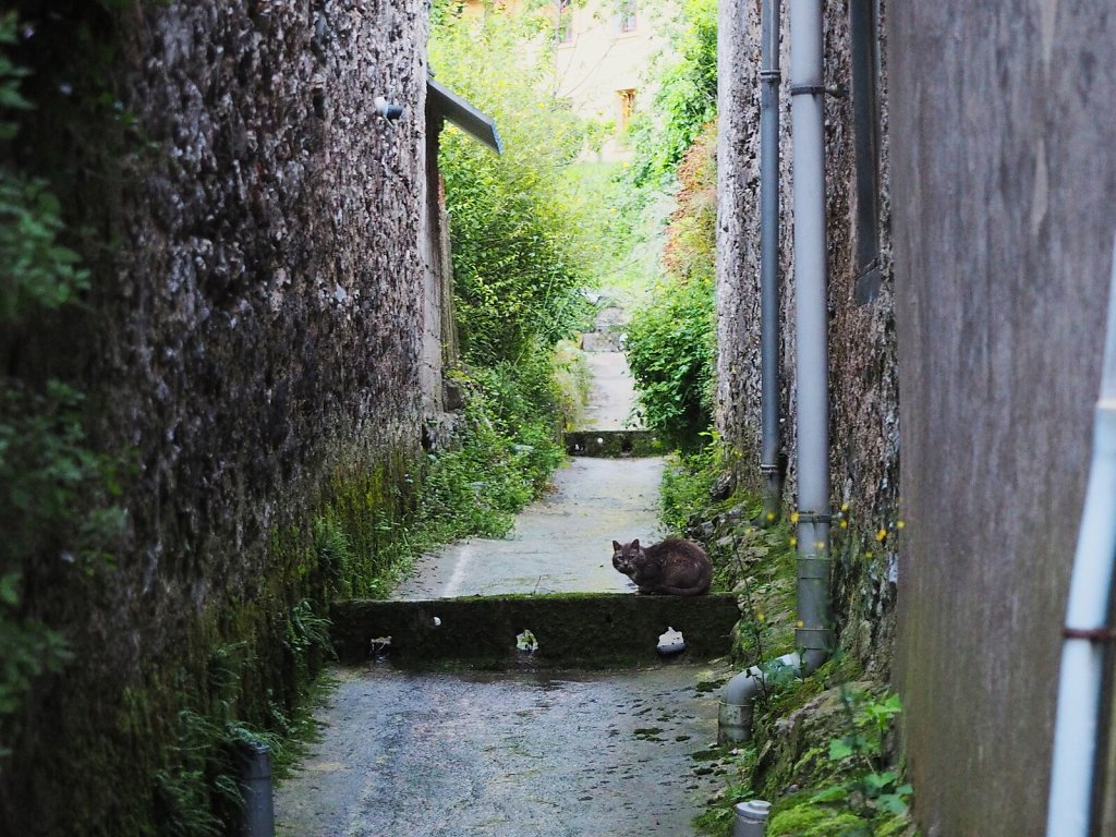 Shy Cat in a Water Drainage Street