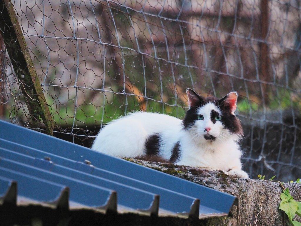 Indifferent Cat