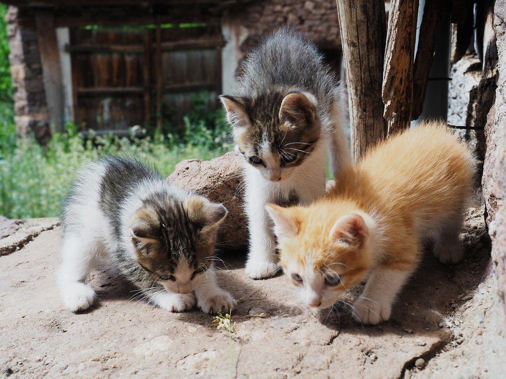 Kittens met during a Hike
